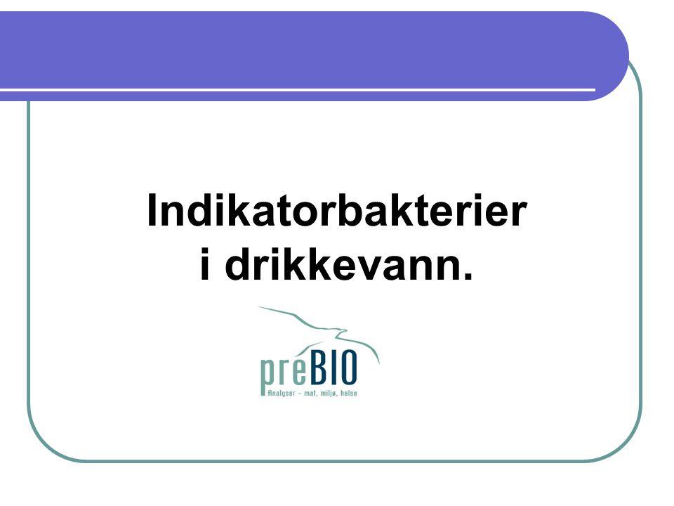 Indikatorbakterier i drikkevann.