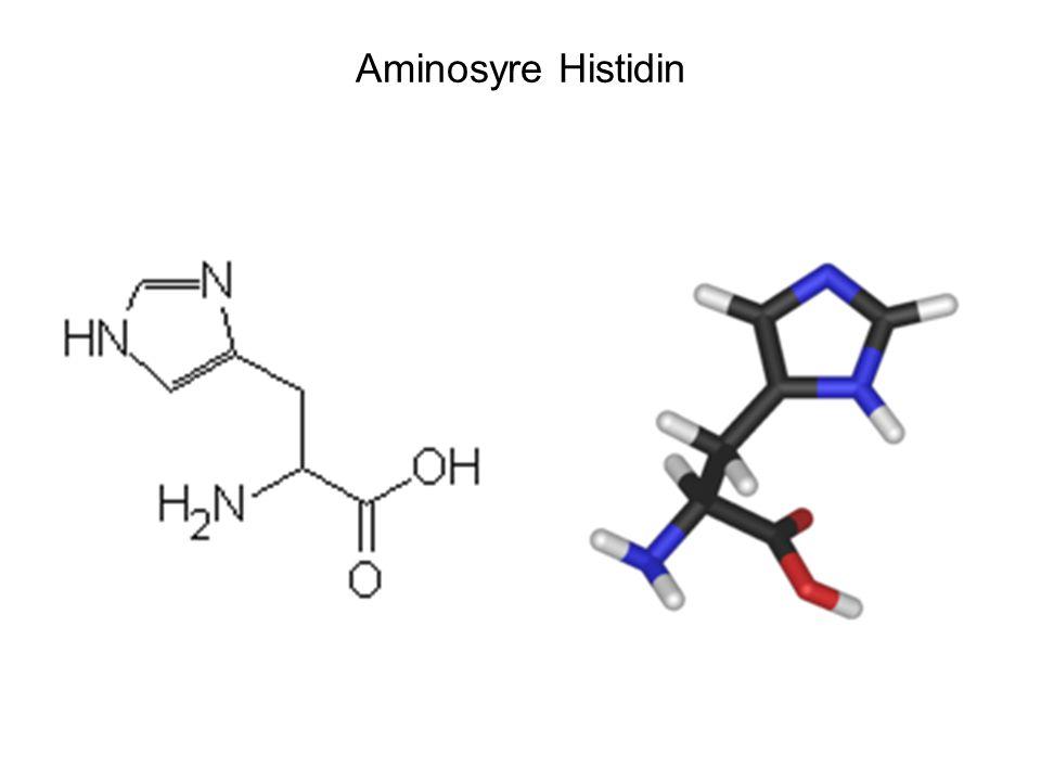 Aminosyre Histidin