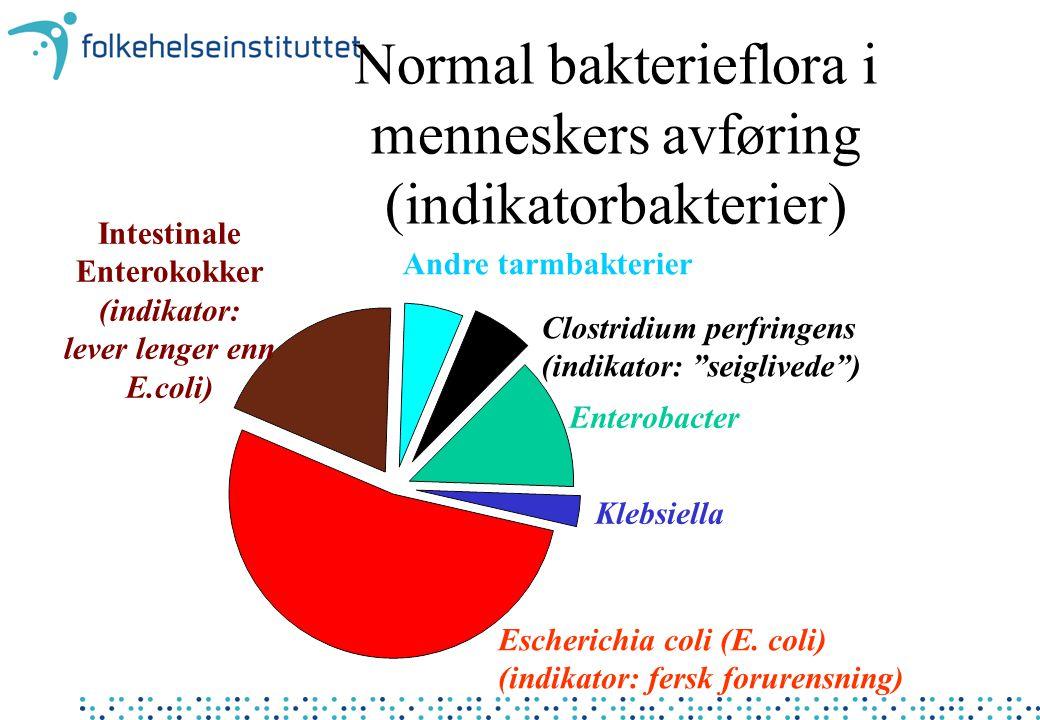 Intestinale Enterokokker lever lenger enn E.coli)