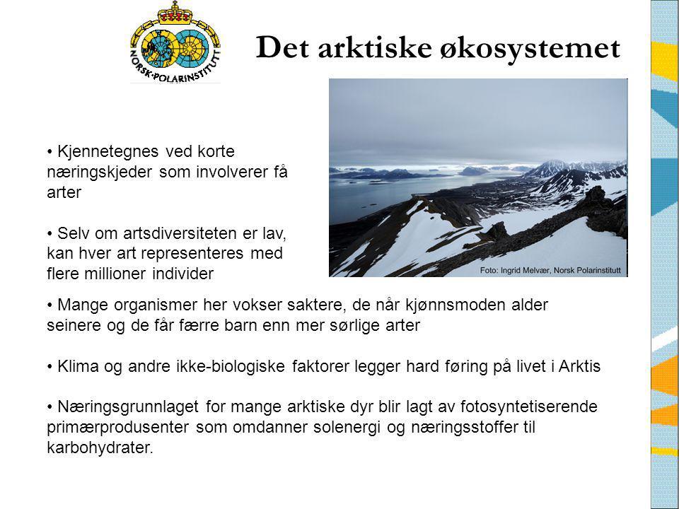 Det arktiske økosystemet