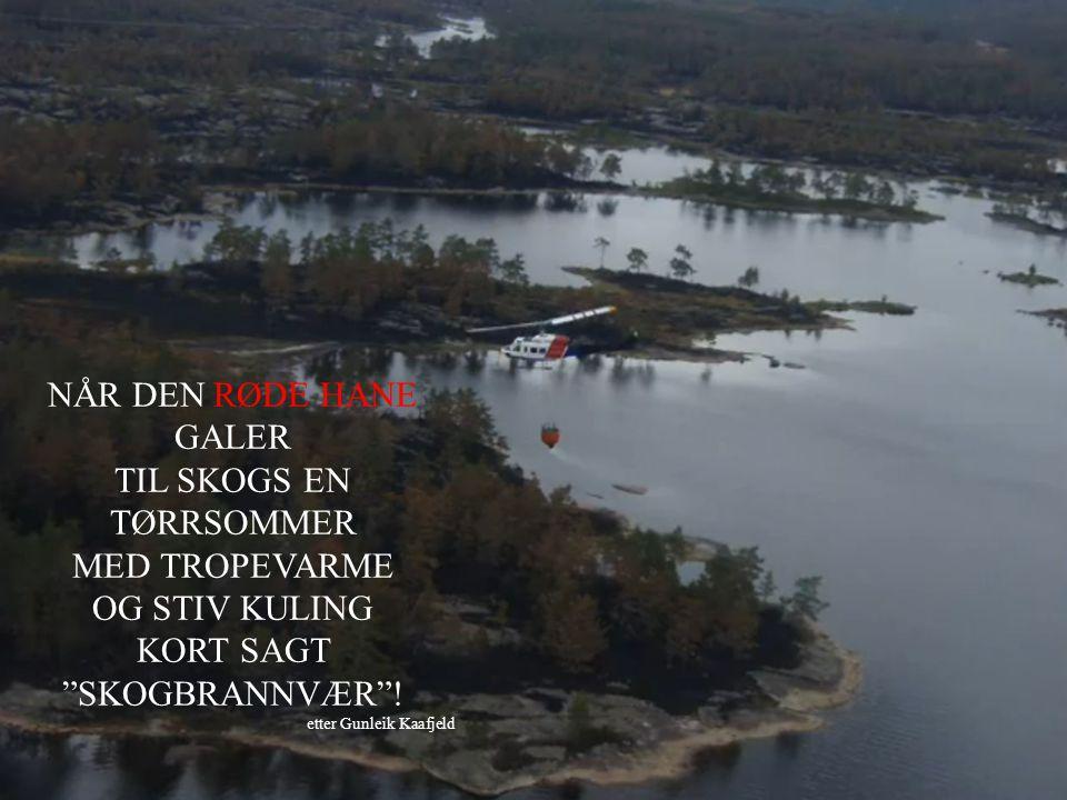 TIL SKOGS EN TØRRSOMMER