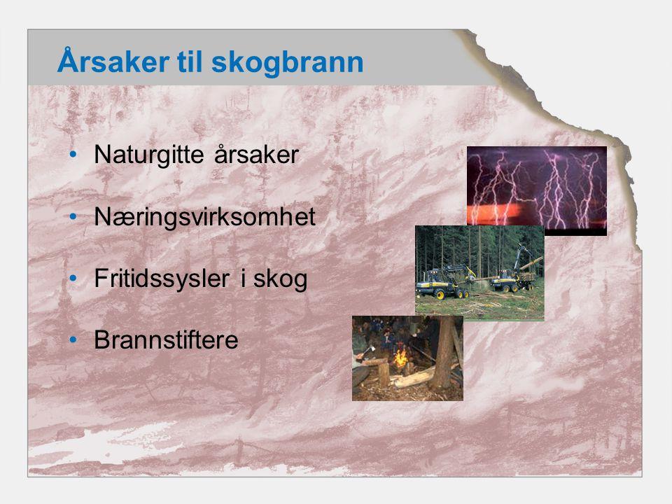 Årsaker til skogbrann Naturgitte årsaker Næringsvirksomhet