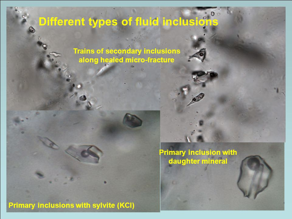 Different types of fluid inclusions