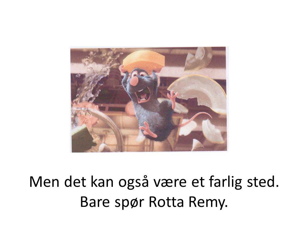 Men det kan også være et farlig sted. Bare spør Rotta Remy.