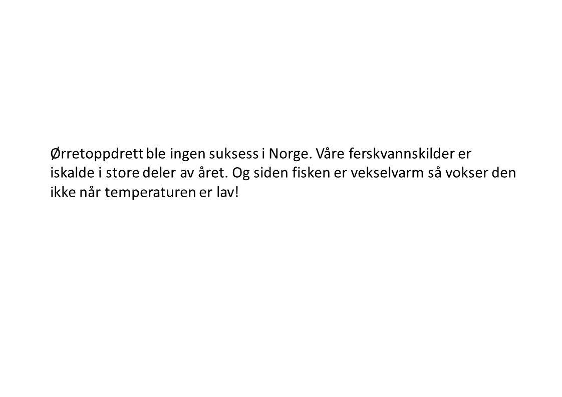 Ørretoppdrett ble ingen suksess i Norge