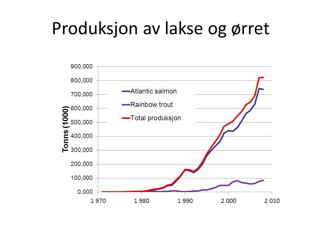 Produksjon av lakse og ørret
