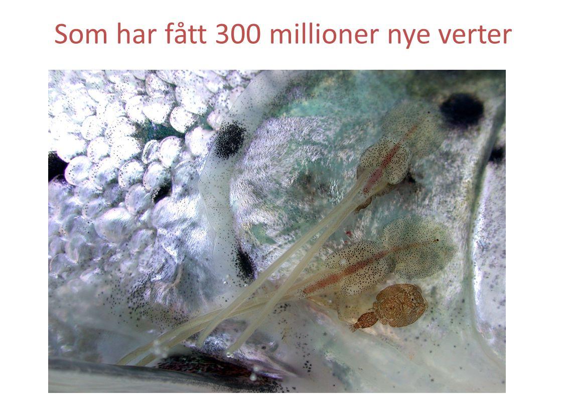 Som har fått 300 millioner nye verter