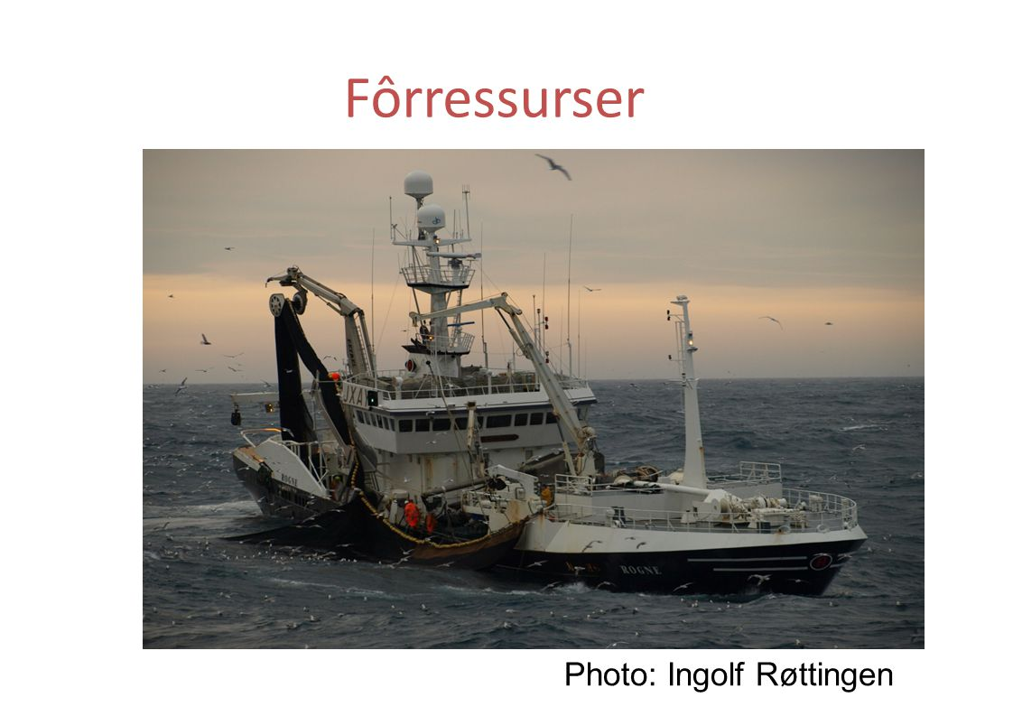 Fôrressurser Photo: Ingolf Røttingen 71