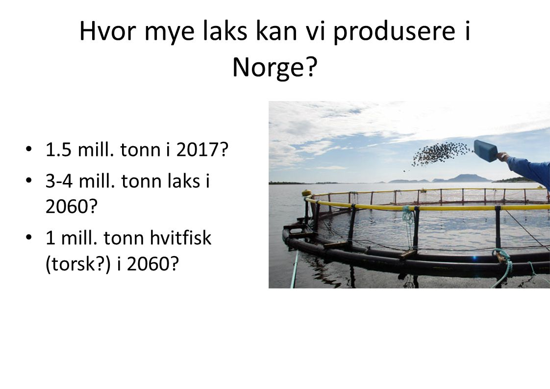 Hvor mye laks kan vi produsere i Norge