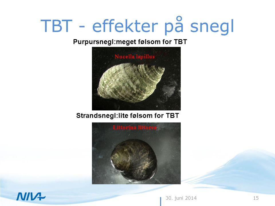 TBT - effekter på snegl Purpursnegl:meget følsom for TBT