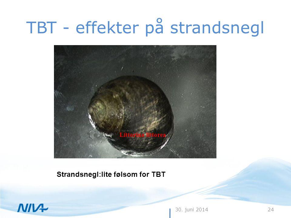 TBT - effekter på strandsnegl