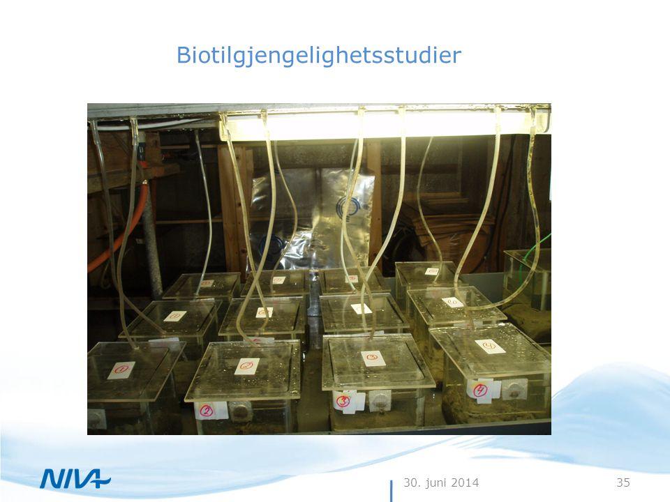 Biotilgjengelighetsstudier