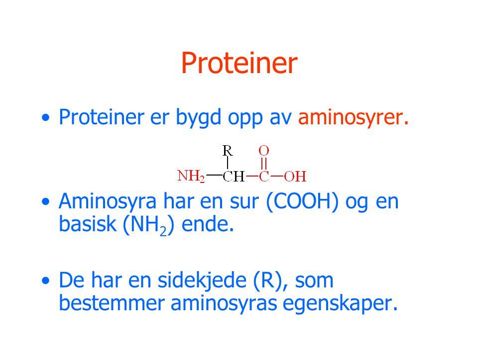 Proteiner Proteiner er bygd opp av aminosyrer.