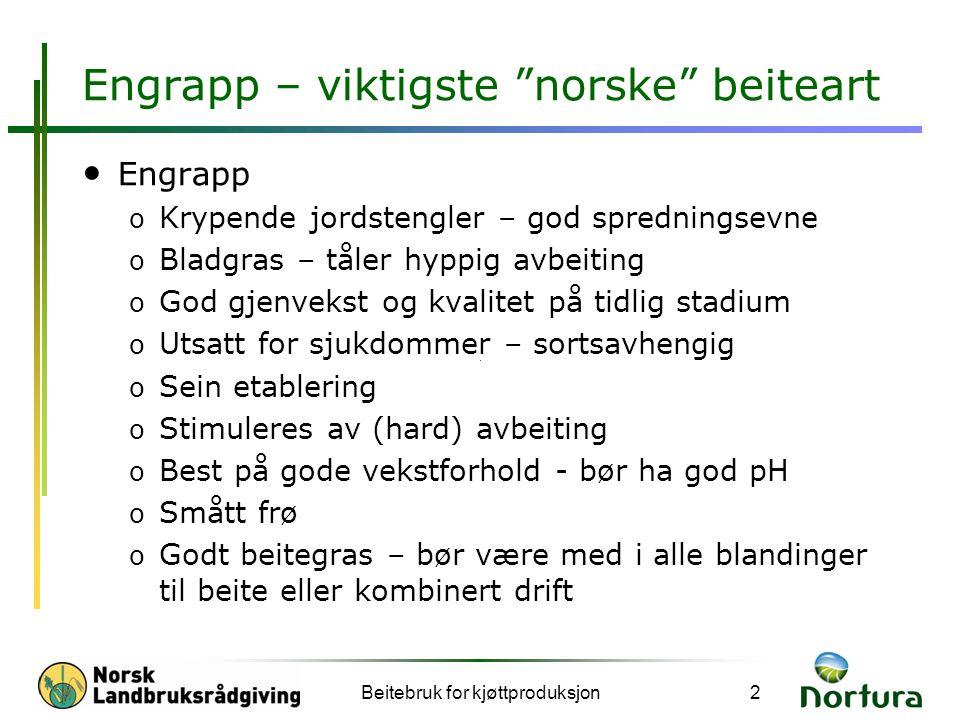 Engrapp – viktigste norske beiteart