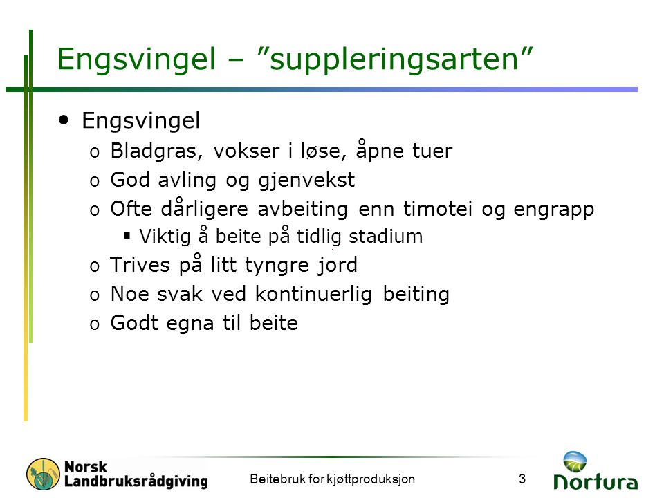 Engsvingel – suppleringsarten