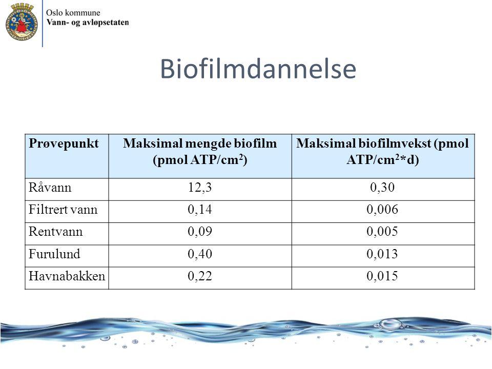 Biofilmdannelse Prøvepunkt Maksimal mengde biofilm (pmol ATP/cm2)