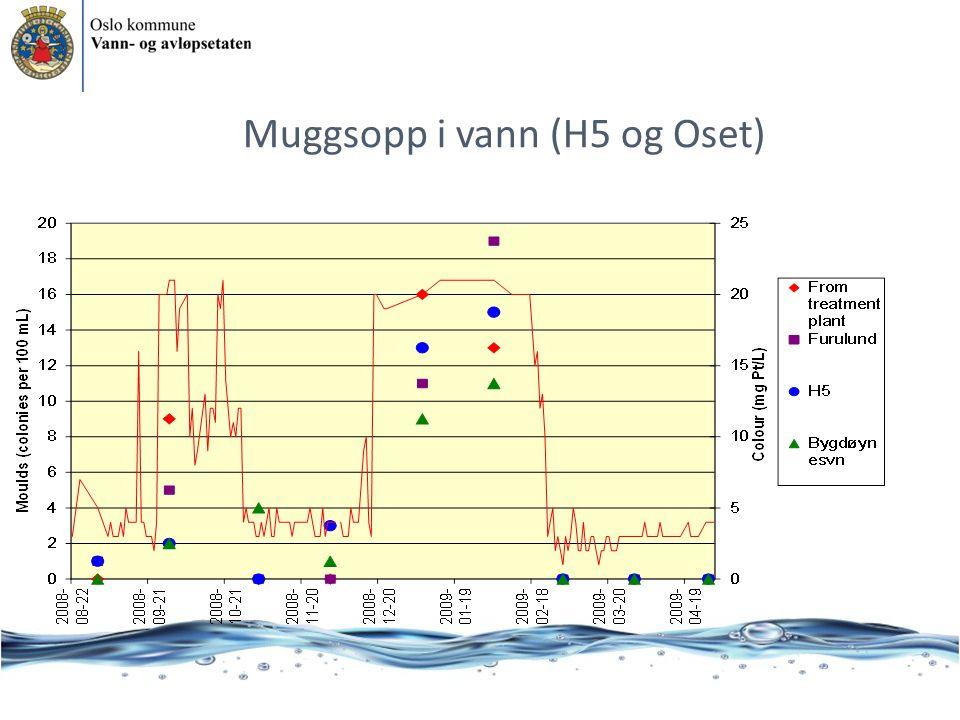 Muggsopp i vann (H5 og Oset)