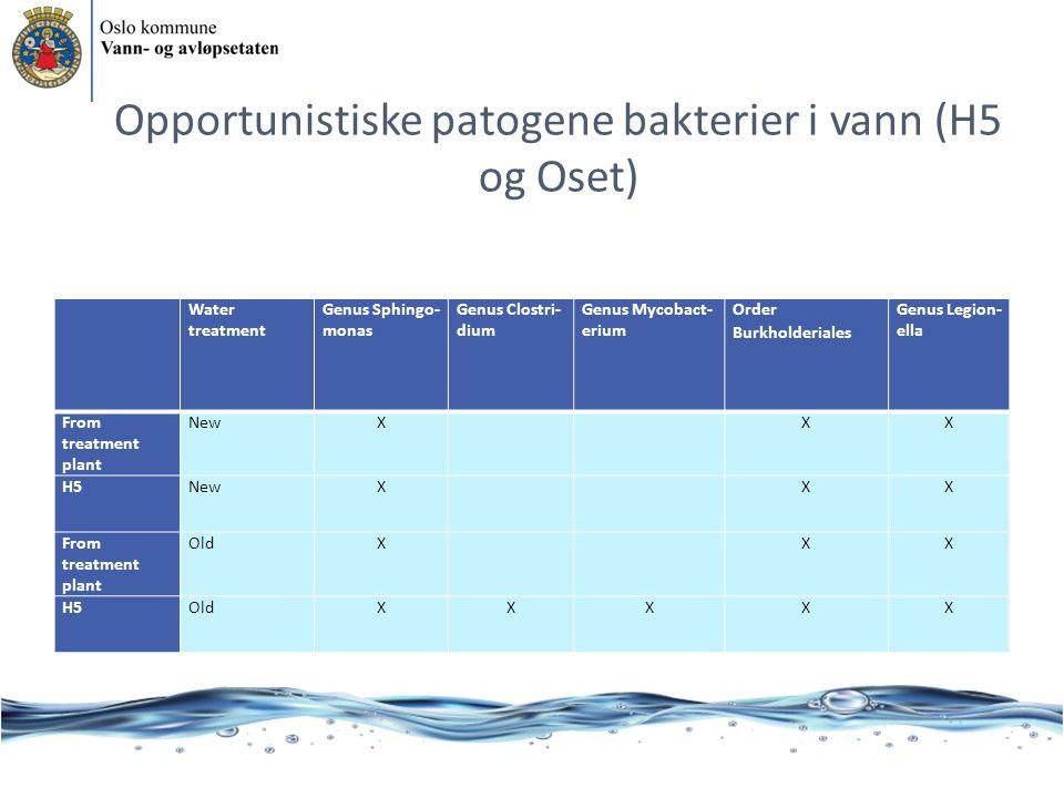 Opportunistiske patogene bakterier i vann (H5 og Oset)