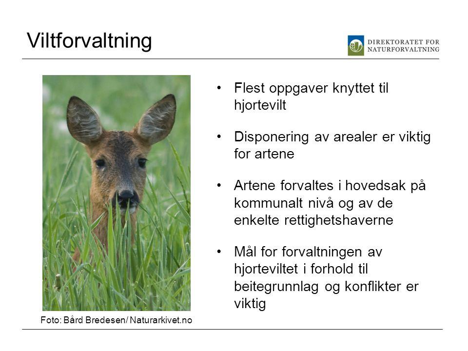 Viltforvaltning Flest oppgaver knyttet til hjortevilt