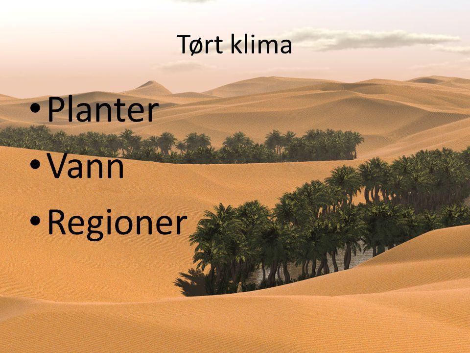 Tørt klima Planter Vann Regioner