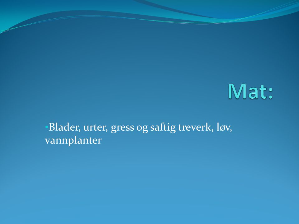 Blader, urter, gress og saftig treverk, løv, vannplanter