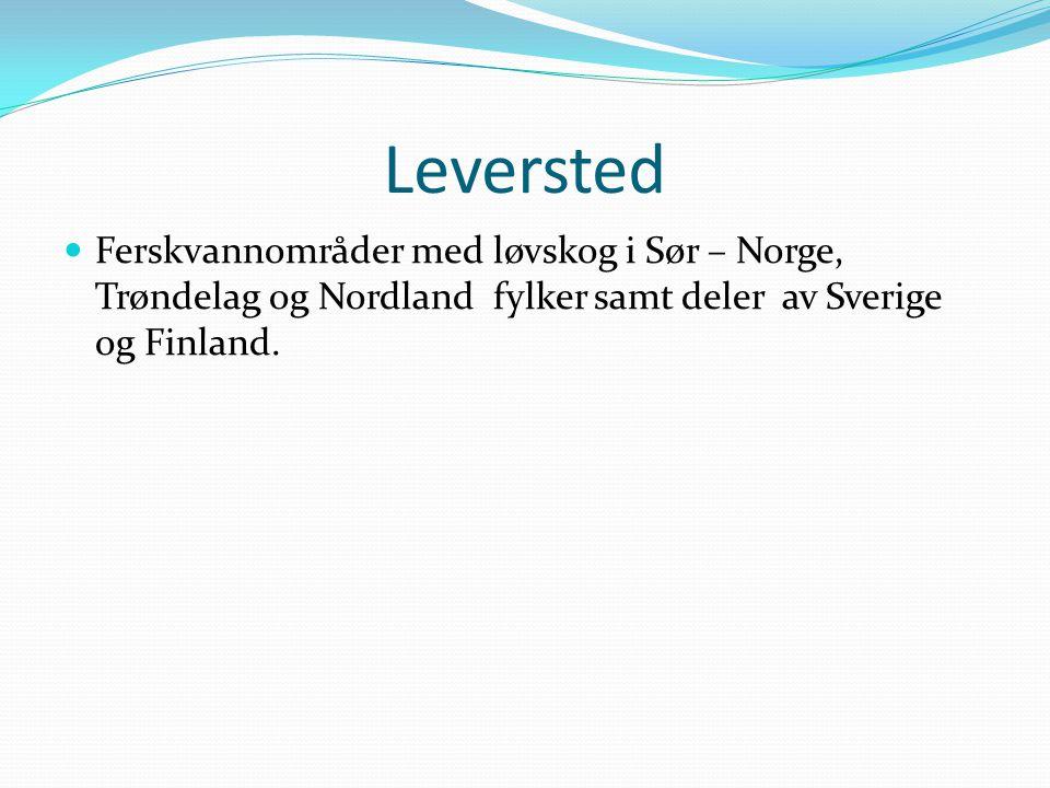 Leversted Ferskvannområder med løvskog i Sør – Norge, Trøndelag og Nordland fylker samt deler av Sverige og Finland.