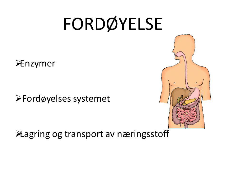 enzymer i fordøyelsessystemet