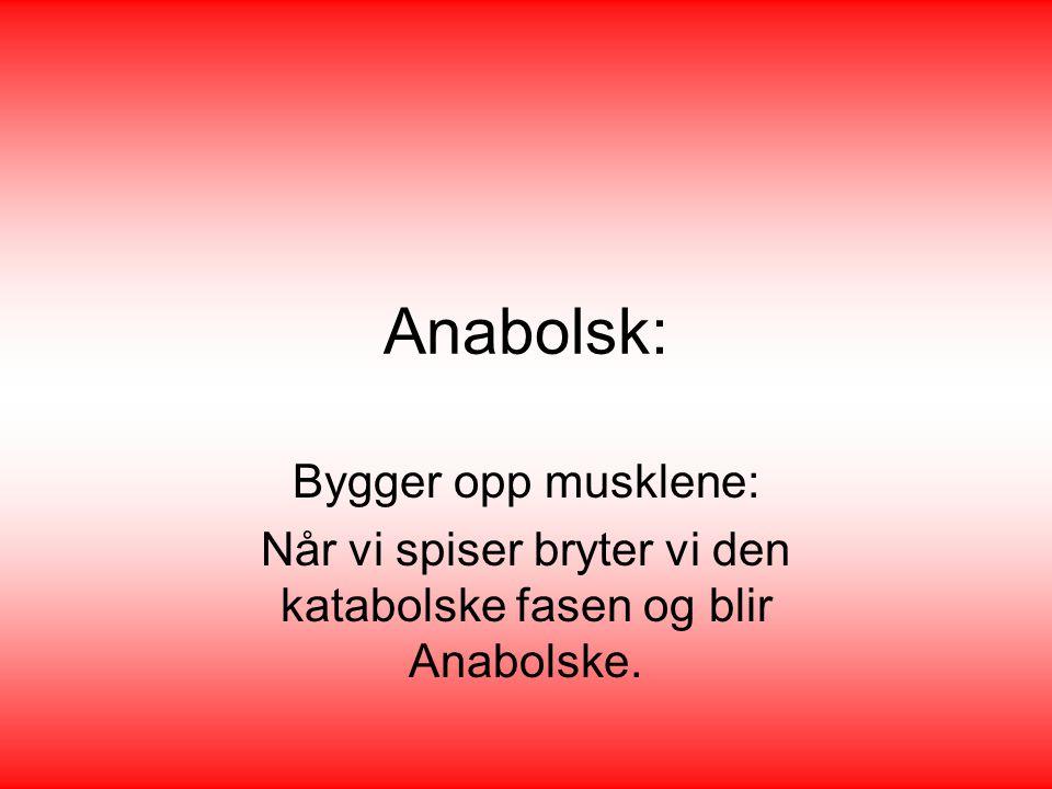 Når vi spiser bryter vi den katabolske fasen og blir Anabolske.