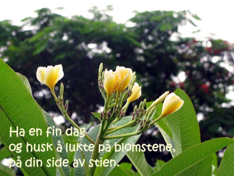 Ha en fin dag og husk å lukte på blomstene, på din side av stien.