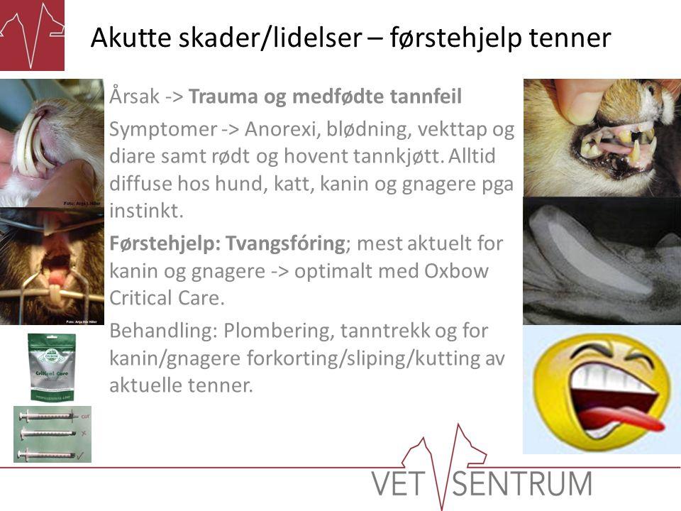 Akutte skader/lidelser – førstehjelp tenner