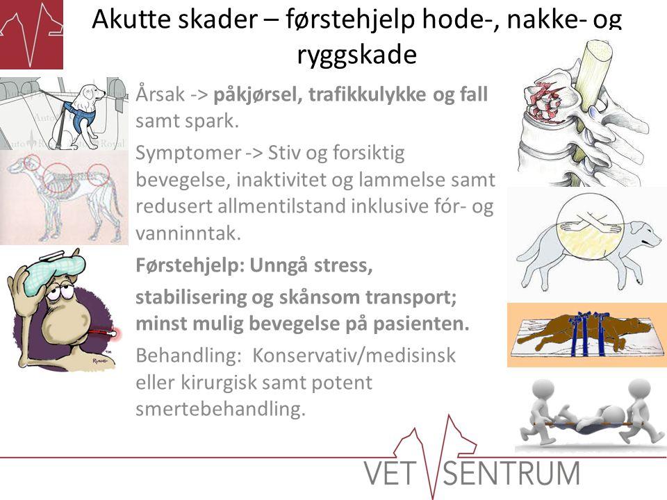 Akutte skader – førstehjelp hode-, nakke- og ryggskade