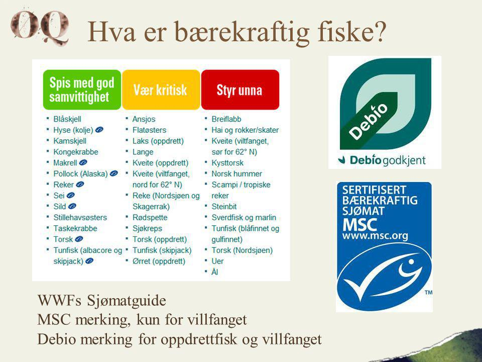 Hva er bærekraftig fiske