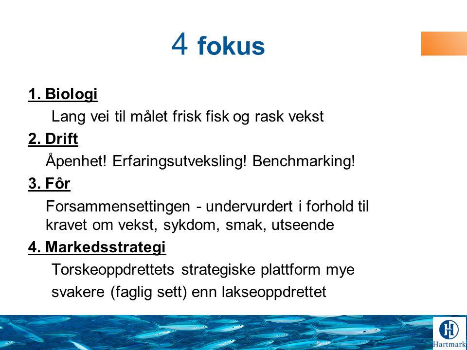 4 fokus