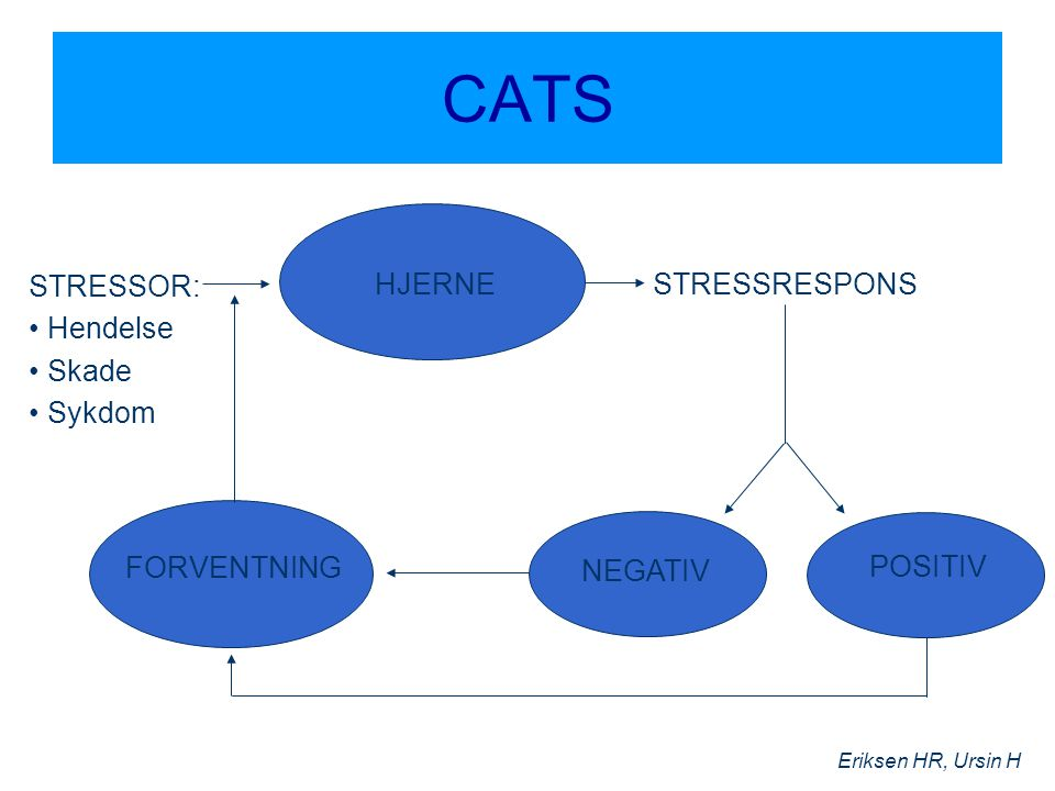 CATS STRESSOR: Hendelse Skade Sykdom HJERNE STRESSRESPONS FORVENTNING