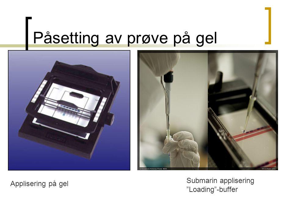 Påsetting av prøve på gel