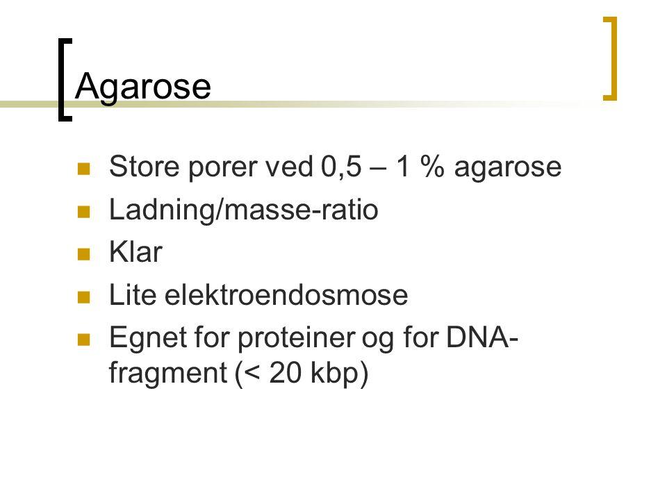 Agarose Store porer ved 0,5 – 1 % agarose Ladning/masse-ratio Klar