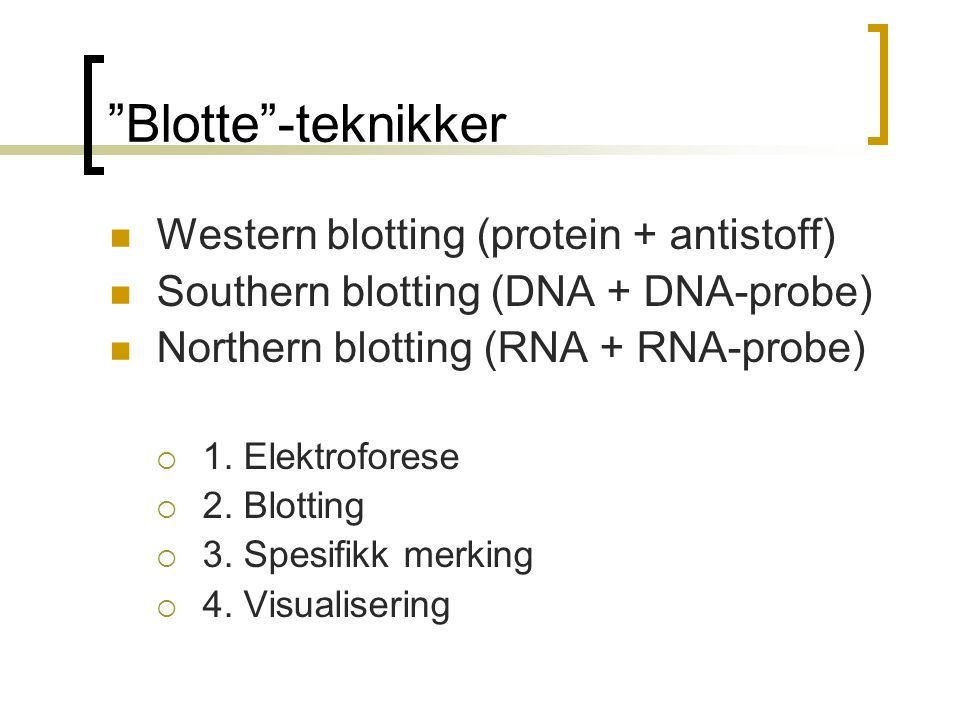 Blotte -teknikker Western blotting (protein + antistoff)