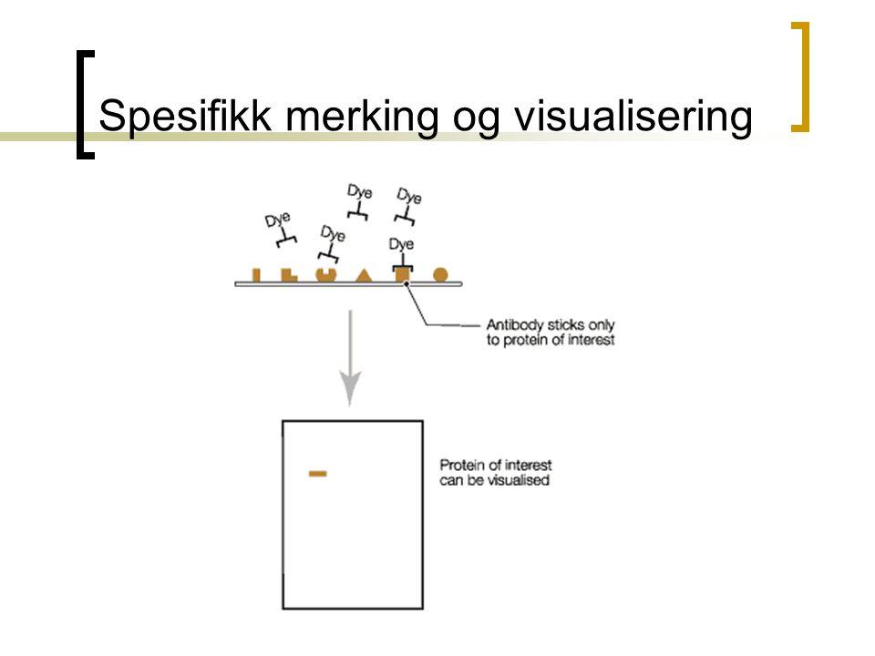 Spesifikk merking og visualisering