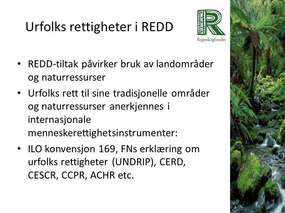 Urfolks rettigheter i REDD