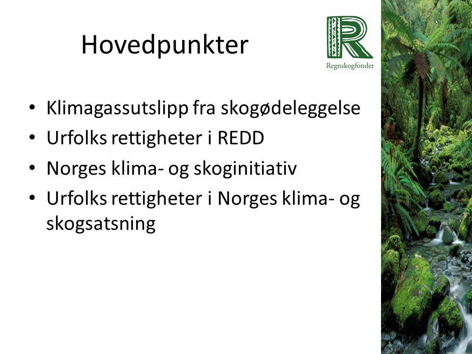 Hovedpunkter Klimagassutslipp fra skogødeleggelse