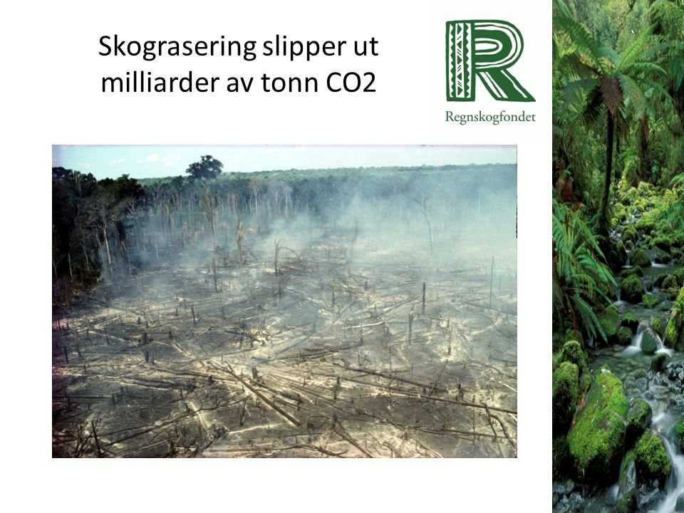Skograsering slipper ut milliarder av tonn CO2