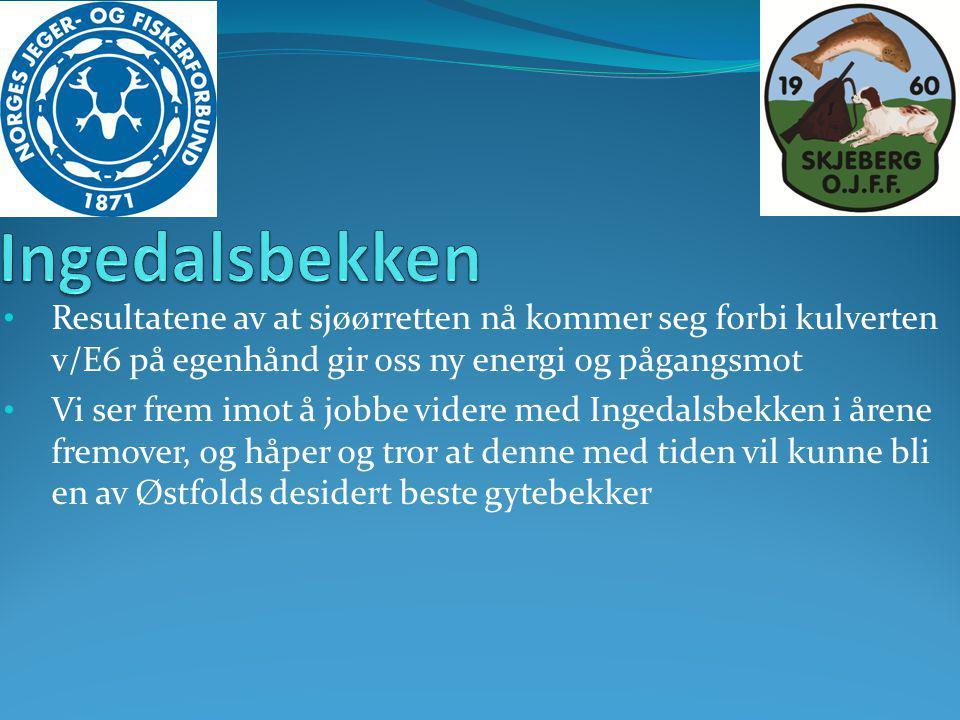Ingedalsbekken Resultatene av at sjøørretten nå kommer seg forbi kulverten v/E6 på egenhånd gir oss ny energi og pågangsmot.