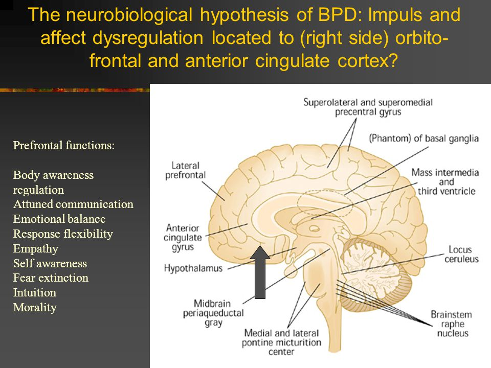The neurobiological hypothesis of BPD: Impuls and affect dysregulation located to (right side) orbito-frontal and anterior cingulate cortex