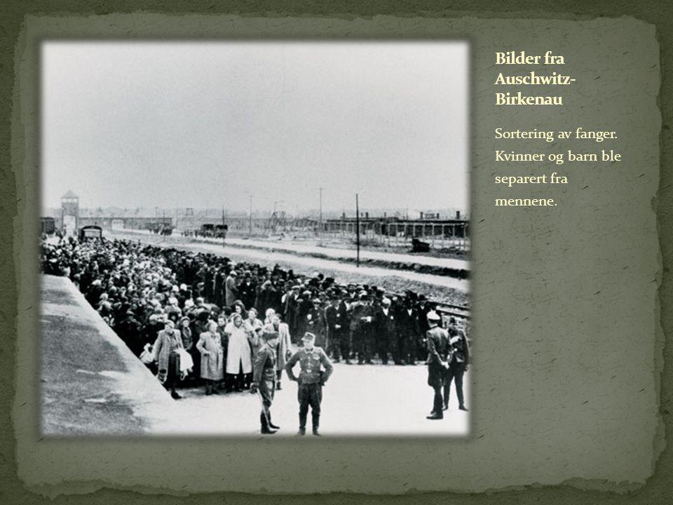 Bilder fra Auschwitz-Birkenau