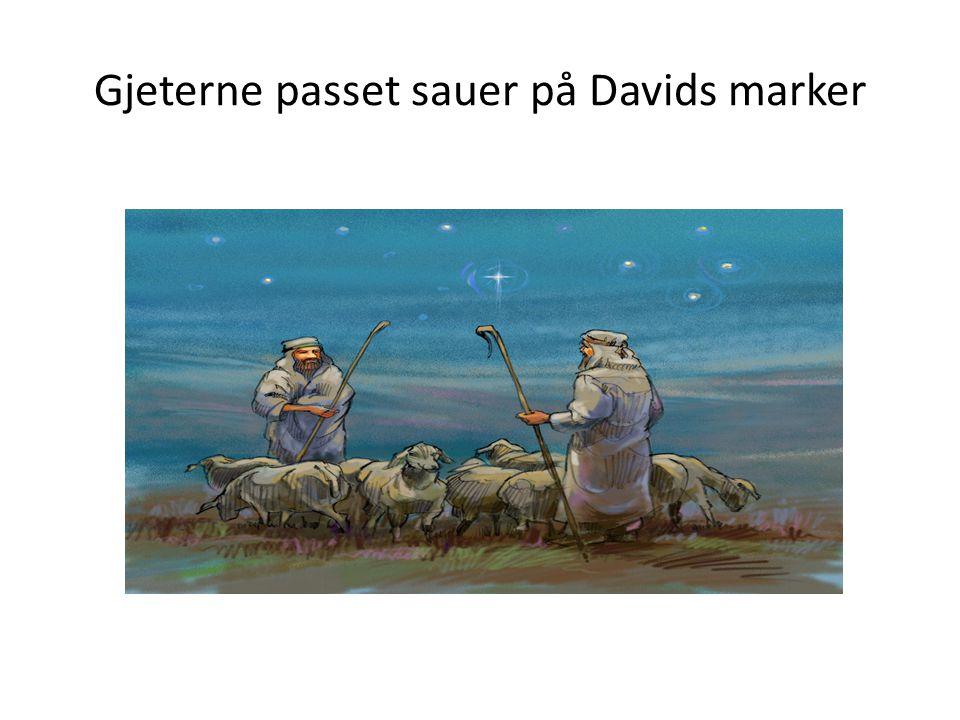 Gjeterne passet sauer på Davids marker