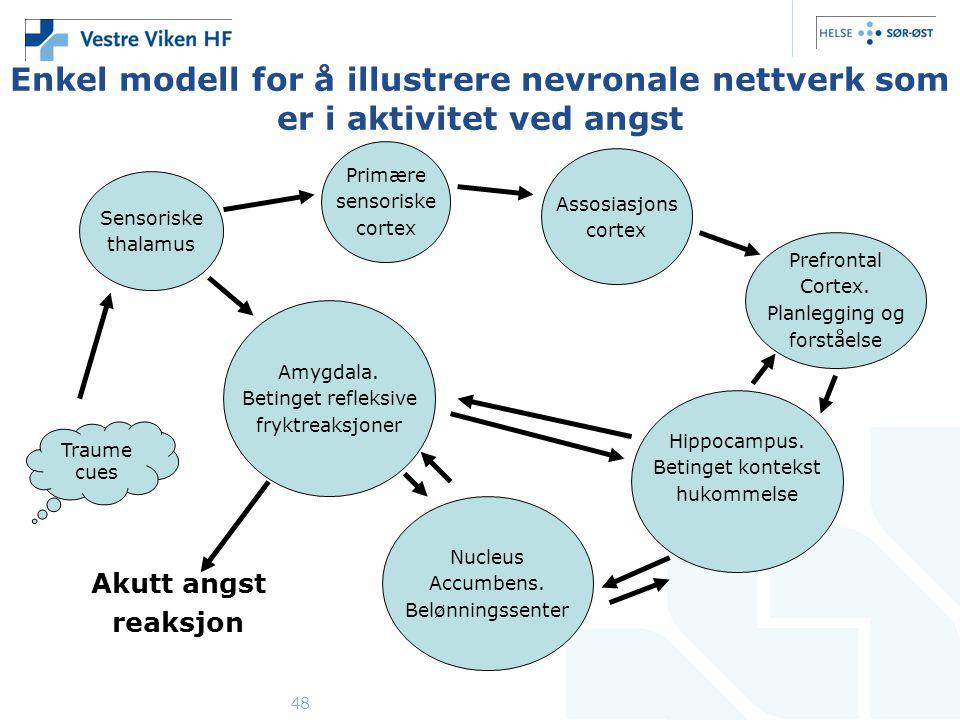 Enkel modell for å illustrere nevronale nettverk som er i aktivitet ved angst
