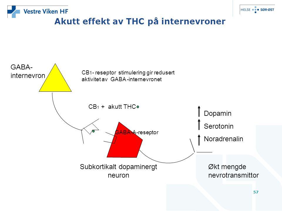 Akutt effekt av THC på internevroner