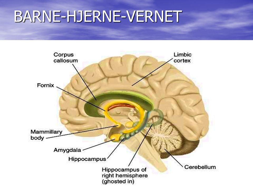 BARNE-HJERNE-VERNET