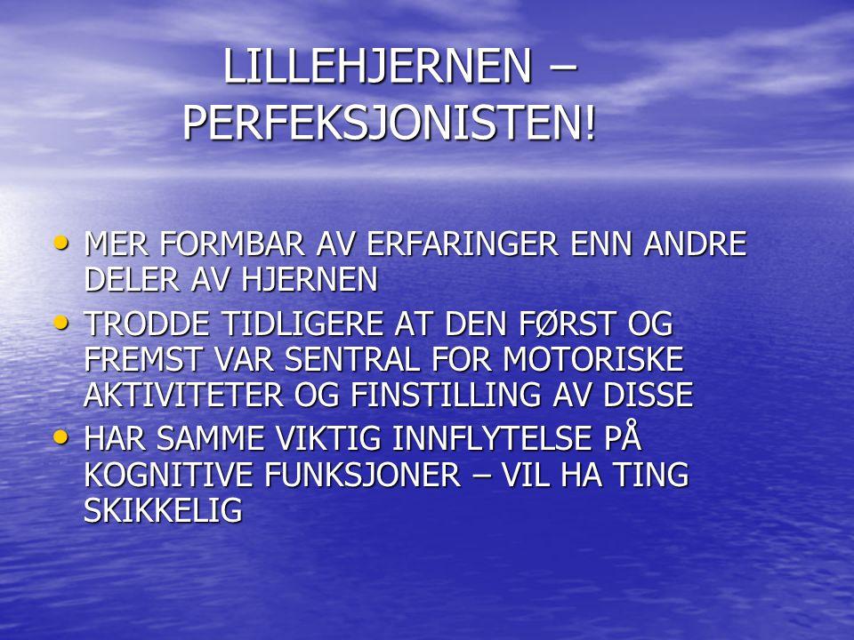 LILLEHJERNEN – PERFEKSJONISTEN!