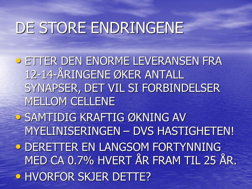 DE STORE ENDRINGENE ETTER DEN ENORME LEVERANSEN FRA 12-14-ÅRINGENE ØKER ANTALL SYNAPSER, DET VIL SI FORBINDELSER MELLOM CELLENE.
